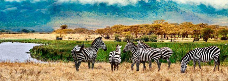 Uganda vize işlemleri